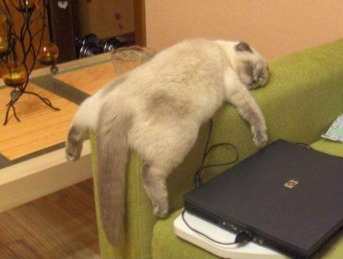 lazy-couch-cat