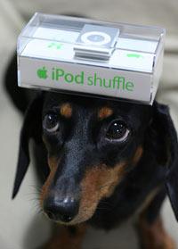 cachorro-evilpod-shuffle