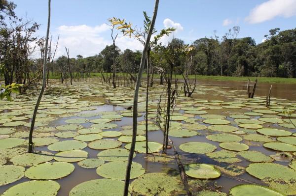 Isso é em Manaus, na Amazônia brasileira (foto: Thássius Veloso)