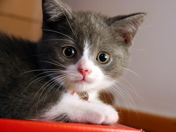 não que algumas pessoas se importem com milhares de fotos de gatos no computador