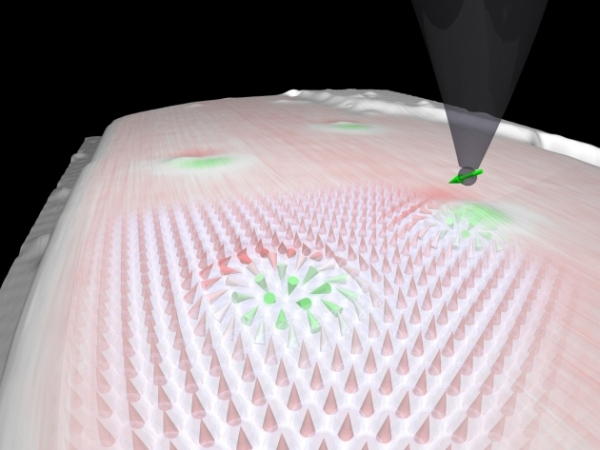 Vórtices torcidas na magnetização de uma superfície metalizada