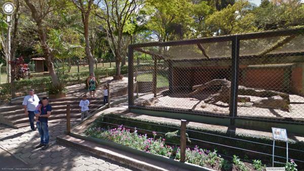 Espécimes bauruenses ficam surpresos com as câmeras do Street View