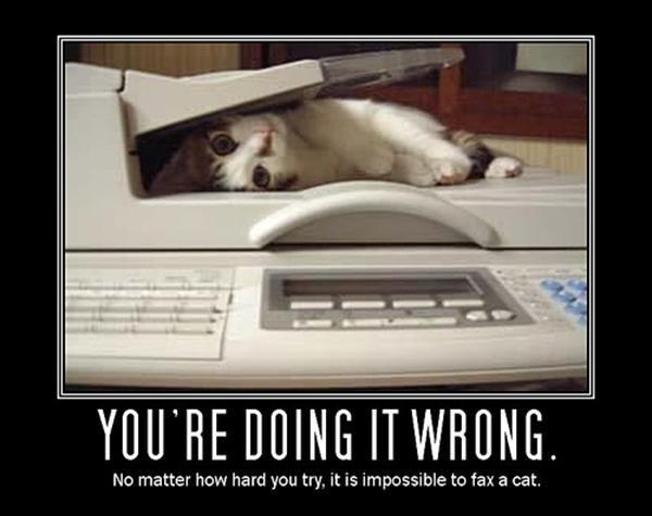 Não importa o quanto você tente, é impossível enviar um gato por fax