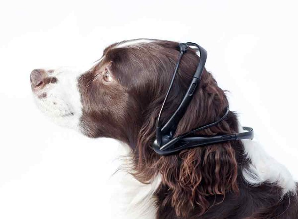 20131127104503-dog2