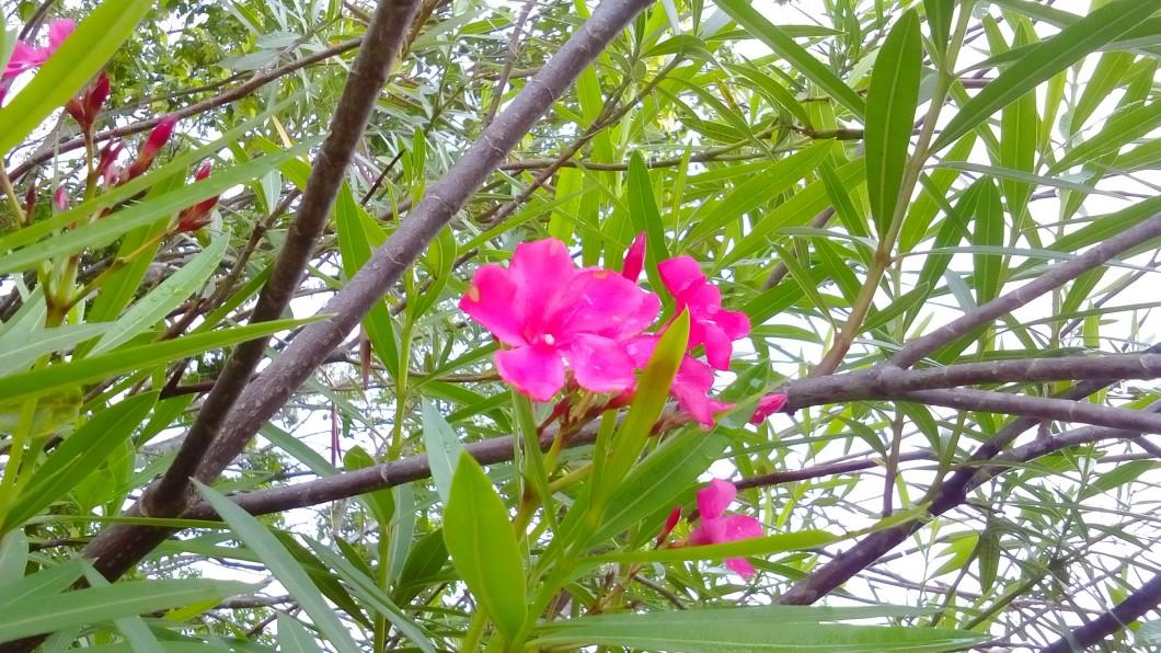 Foto feita com o Sony Xperia E4