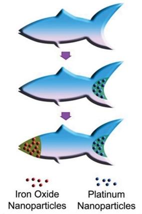 Peixes-robôs microscópicos