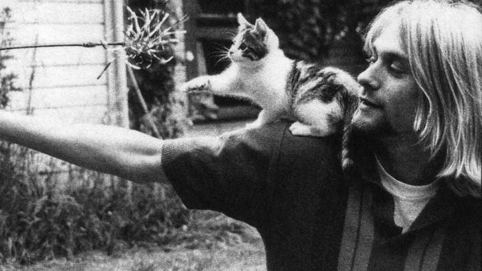kurt-cobain-cat