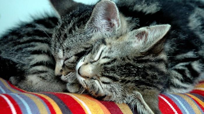 sono-dormir-gato-fofinho-5