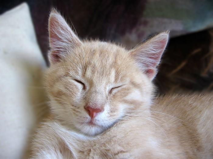 sono-dormir-gato-fofo-3