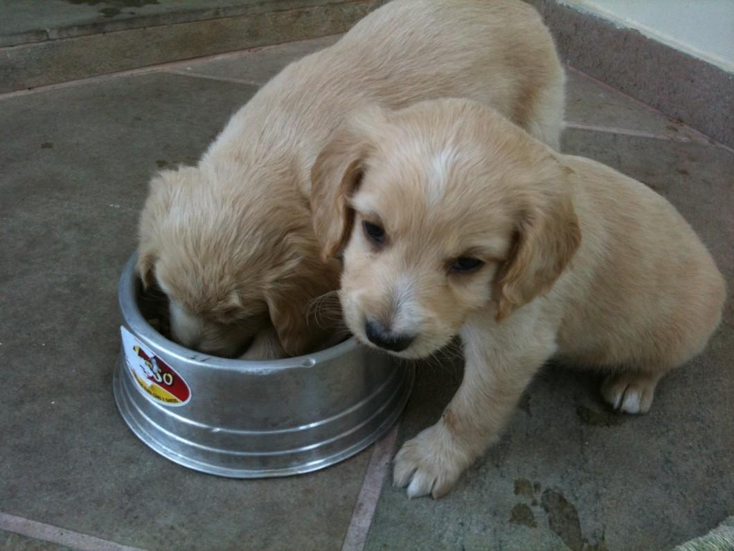 Harry (direita) e seu irmão, no dia da adoção. Infelizmente o destino separou os dois em lares distintos :(