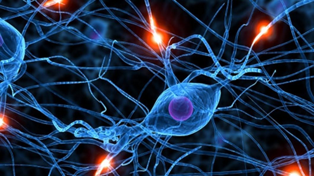 sinapses
