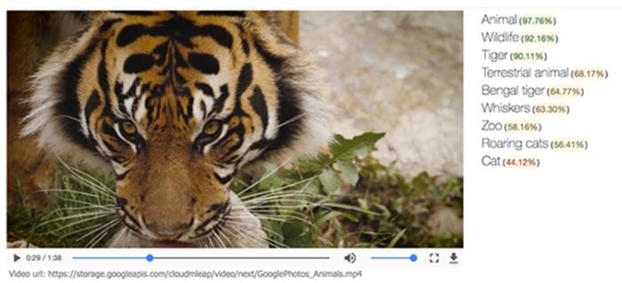 Cloud Video Intelligence - tigre
