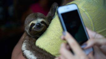 Os maus-tratos que animais selvagens sofrem para fotos turísticas de Instagram