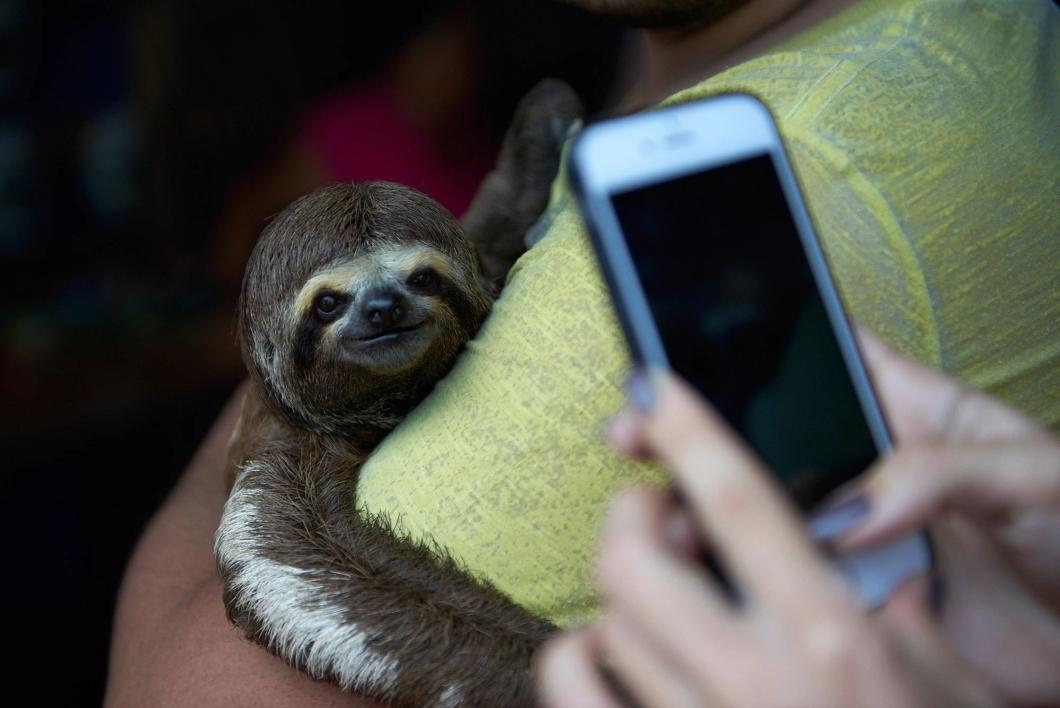 Os maus-tratos que animais selvagens sofrem para fotos turísticas de Instagram – Tecnoblog
