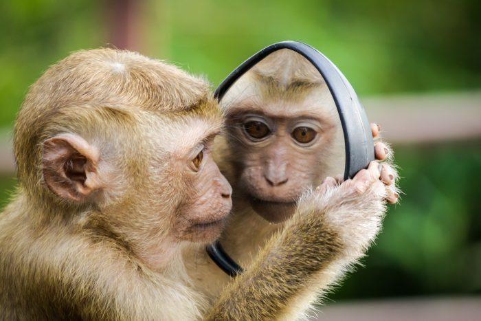 Macaco / Pexels / Espelho