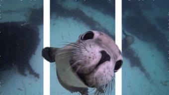 O que é o Split Depth GIF (3D)?