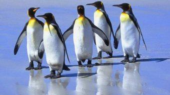 Linus Torvalds anuncia oficialmente o Linux 5.0