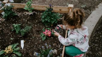 5 apps para identificar plantas por fotos