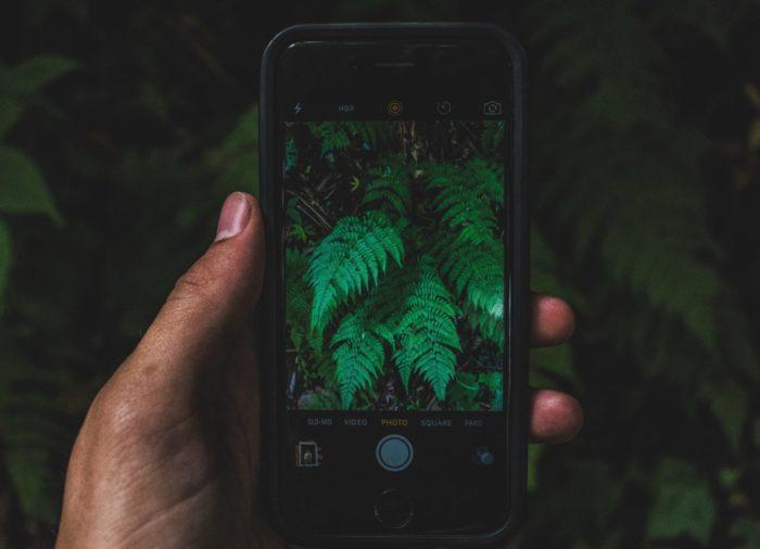 tyler-mullins-app-para-identificar-plantas-unsplash