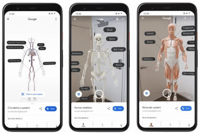 Google - corpo humano 3D em realidade aumentada