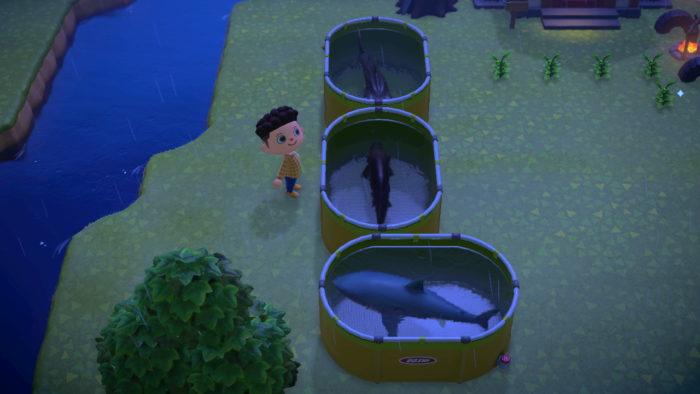 tubarões em animal crossing new horizons / lucas lima / captura de tela