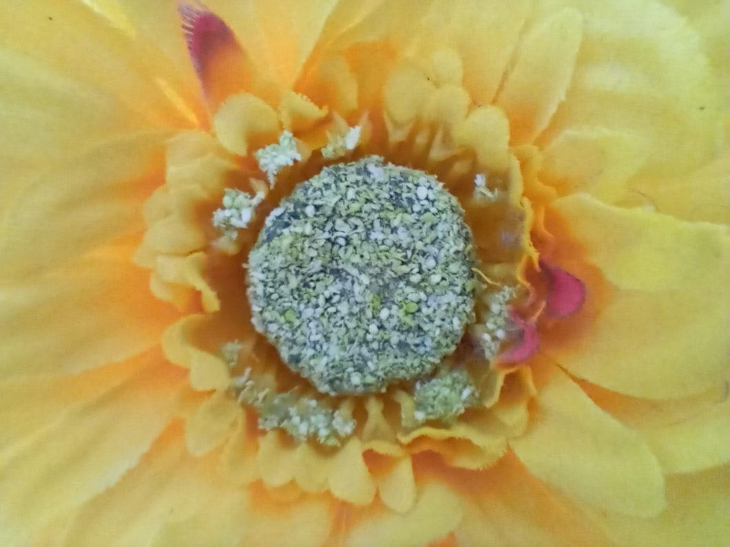 Foto de uma flor tirada com a lente macro