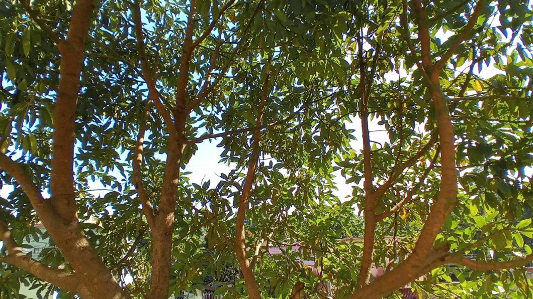 Foto de uma árvore feita com o LG K41S