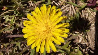 Foto de uma flor amarela com a lente macro