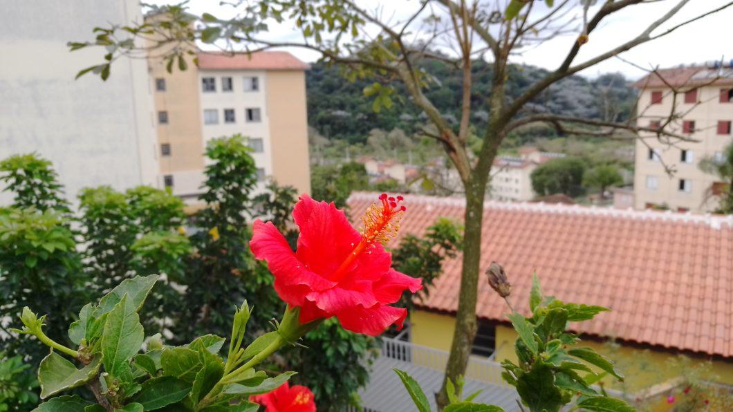 Foto de paisagem com uma flor no centro