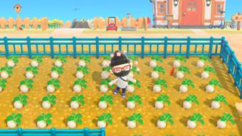 O que é turnip em Animal Crossing: New Horizons [Nabos]