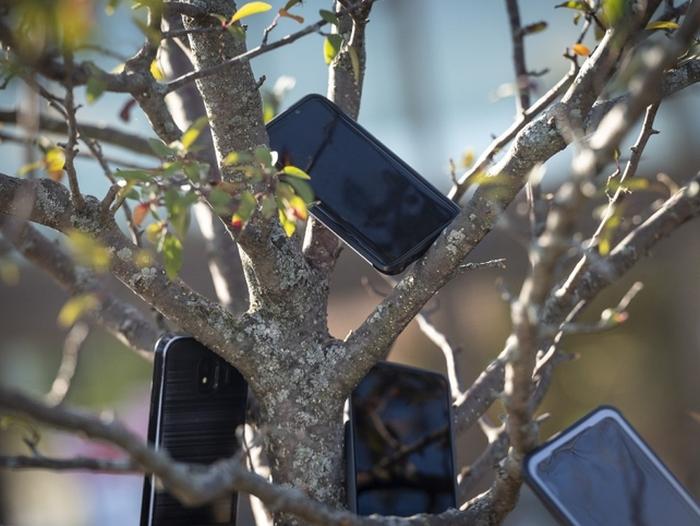 Celulares em árvore nas proximidades de uma unidade da Whole Foods (foto: Bloomberg)