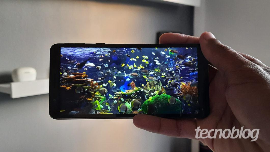 Imagem mostrando vários peixes na tela do Galaxy A01 Core