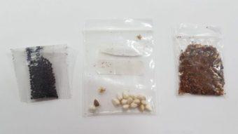"""Por que lojas da China enviam """"sementes misteriosas"""" ao Brasil"""