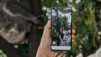 Google adiciona canguru e coala 3D em realidade aumentada