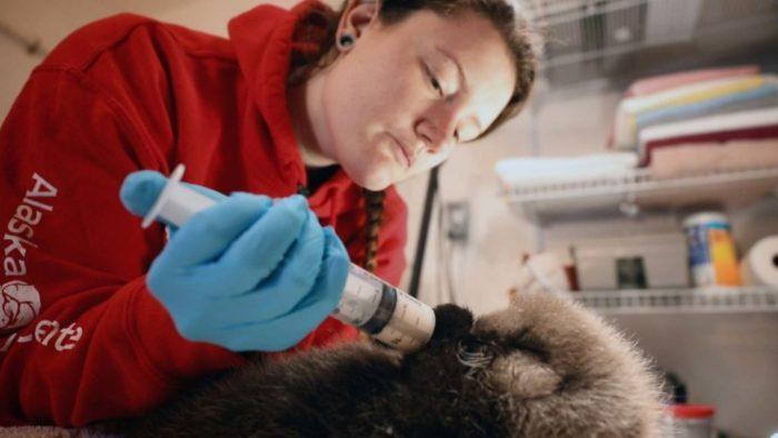 Alaska: Reabilitação Selvagem (Imagem: Divulgação/Disney+)