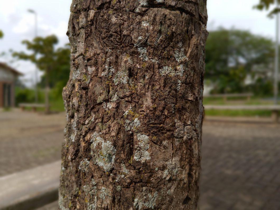 Blurred background (image: Emerson Alecrim / Tecnoblog)