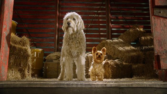 10 filmes sobre cachorros na Netflix / Netflix / Divulgação