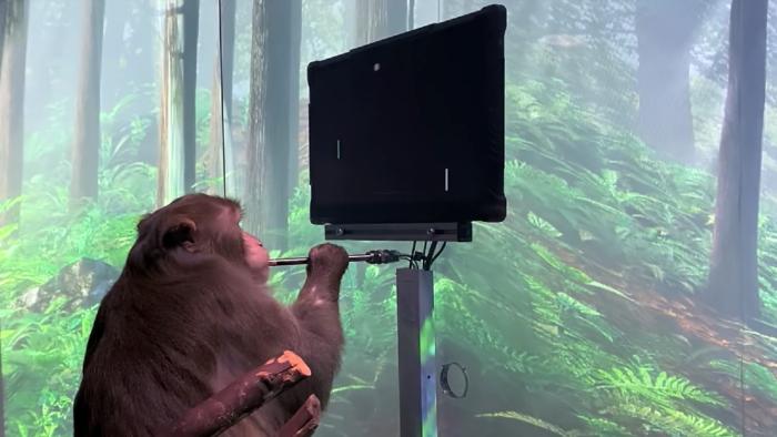 Neuralink, de Elon Musk, mostra vídeo de macaco jogando Pong com a mente (Imagem: Reprodução/Neuralink/YouTube)