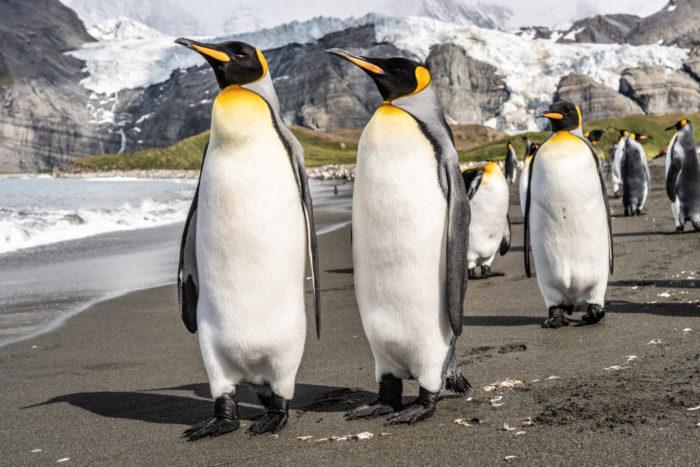 O que é Linux? / Hubert Neufeld / Unsplash