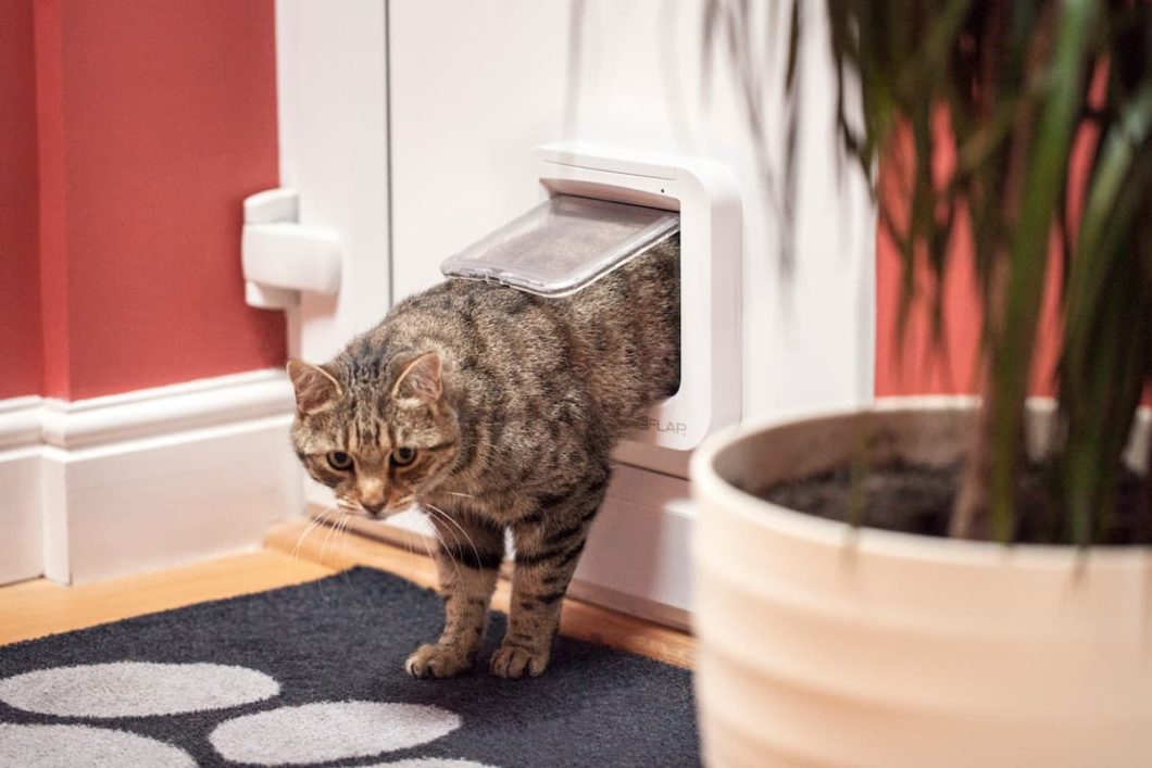 Gato passando por porta inteligente Sureflap